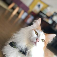 保護ねこ/ペット/猫/にゃんこ同好会/インテリア 寝ぼけまなこと、タワーから びっくり😻