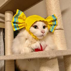 保護ねこ/かぶりもの/フォロー大歓迎/猫/にゃんこ同好会 飴とライオン😀 ちゅーるのご褒美があるの…