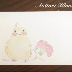 ポストカード/母の日 母の日用カード