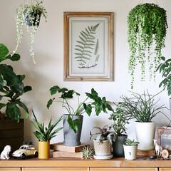 ローボード/みどりの雑貨屋/漆喰/うま〜くヌレール/観葉植物/インテリアグリーン/... ローボードの上は 我が家のグリーンギャラ…
