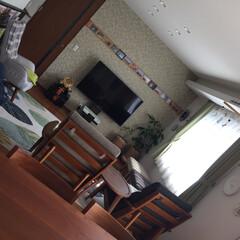 刺繍枠/IKEAのボタン/植物/壁付け風テレビ台/エコカラット/グリーン/... リミア初投稿です! 元々は木目調の壁紙だ…