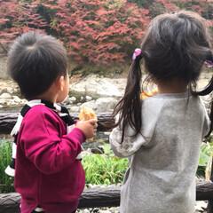 おでかけ/紅葉/フォロー大歓迎/秋/風景/旅/... 今日は紅葉を見に香嵐渓に行ってきました🍁…(2枚目)