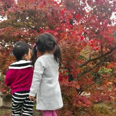 おでかけ/紅葉/フォロー大歓迎/秋/風景/旅/... 今日は紅葉を見に香嵐渓に行ってきました🍁…(3枚目)