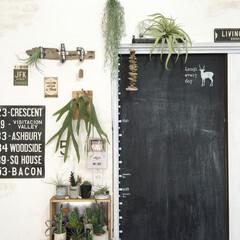 漆喰DIY/黒板DIY/流木/フェイクグリーン/いなざうるす屋さん/rkmamaさんのプレゼント企画に...