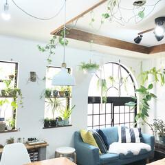 植物のある暮らし/観葉植物/フェイクグリーン/植物/グリーン/DIY/... 窓際に板をつけて観葉植物をおいたり、天井…