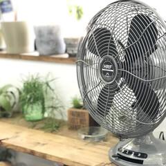 ハモサ/扇風機/雑貨/インテリア/住まい わが家の暑さ攻略法のコンテストに応募しま…