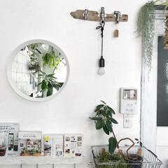 鏡/丸鏡/植物のある暮らし/グリーンのある暮らし/IKEA/インテリア/... デッドスペースになる壁際(^^) IKE…
