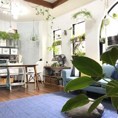 デニムラグ/植物/グリーンのある暮らし/植物のある暮らし/ボタニカルライフ/ボタニカル/... 久しぶりにスッキリと片付いたリビング全体…(1枚目)