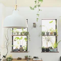 観葉植物/植物のある暮らし/フェイクグリーン/植物/グリーン/DIY/... 本物の観葉植物とフェイクグリーンを一緒に…