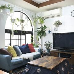 リビング/こたつ/インテリア/DIY/家具/ニトリ/... リビング写真です(^^) ニトリさんのこ…(1枚目)