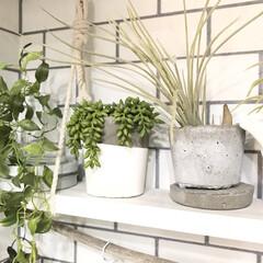 フェイクグリーン/セメント/セメント鉢/インテリア/DIY/雑貨/... キッチン棚に飾っている手作りのセメント鉢…