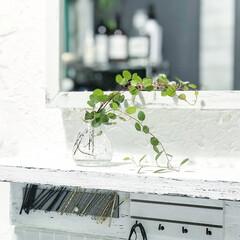 洗面所/ワイヤープランツ/植物/ナチュラルキッチン/グリーン/DIY/... 洗面所の写真です(^^) 洗面所の鏡の前…