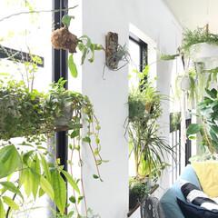 植物のある暮らし/グリーンのある暮らし/植物/ボタニカル/DIY/雑貨/...  窓際の写真(^^)春から夏にかけてグリ…