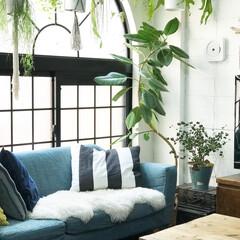 フェイクグリーン/植物のある暮らし/グリーンのある暮らし/観葉植物/植物/グリーン/... ソファカバーを水色に変えました♪ ソファ…