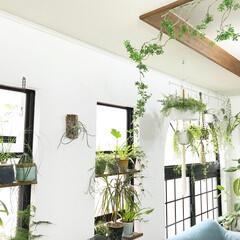 グリーンのある暮らし/植物/ボタニカルライフ/植物と暮らす/インテリア/DIY/... 久しぶりにリビング写真^_^ 雨続きです…