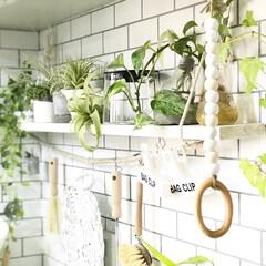 キッチンインテリア/フェイクグリーン/植物のある暮らし/ボタニカル/DIY/雑貨/... おはようございます(^^) キッチン写真…