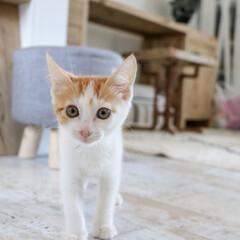 カメラ目線/cat/猫 カメラを向けると興味深々なココ♪レンズの…