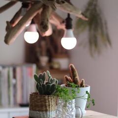 観葉植物/サボテン/ECO/エコ/ALOHAlight/アロハライト/... 太陽があたらなくてもイキイキと育つ!! …