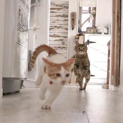 cat/猫/猫の大運動会 2匹揃うとすぐ大運動会♪バタバタバタバタ…