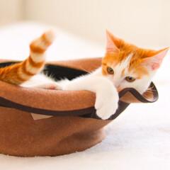 ハット/帽子/cat/ねこ/猫 小さい頃にしか撮れないシャッターチャンス…
