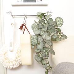お掃除道具/お風呂/ユキノシタ/フェイクグリーン/浴室・風呂 バスルームのお掃除用ハンガーバーには、ユ…