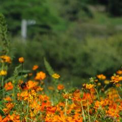 おでかけ 今日は近くの公園にお花見に来ました。秋の…