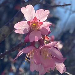 暖かい日/快晴/ナチュラル/春/春一番/2020年/... こんにちは(o^^o) いつもありがとう…
