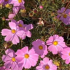 花の写真/お花の写真/平塚/平塚市/ナチュラルな暮らし/ナチュラル/... こんばんは(o^^o) いつもありがとう…