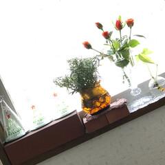 レンガ/レンガインテリア/アロマライト/8月/8月/八月/... こんにちは(o^^o) いつもありがとう…