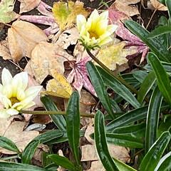 冬の訪れ/上着/花の写真/涼しい/寒い/徒歩/... こんばんは(o^^o) いつもありがとう…
