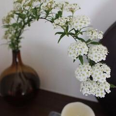 花のある暮らし/玄関飾り 小手毬♪