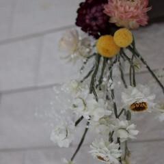 ミニスワッグ/プリザーブドフラワーとドライフラワー/ミンネ/紫陽花/ユーカリ ドライフラワーのミニスワッグです♪ ht…