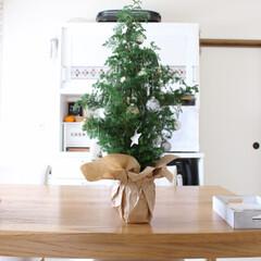 アレンジメント/クリスマスツリー/クリスマス/雑貨/インテリア さつま杉の枝を3本束ねて、花瓶には紙を巻…