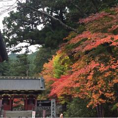 日光/旅行/秋/風景/おでかけ 初、日光一人旅です。 紅葉も綺麗でした🍁…