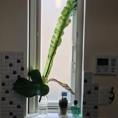 モザイクタイル プチコレガラスMIX ホワイト | 藤垣窯業(その他建築用タイル)を使ったクチコミ「我が家は塗り壁になっていますが、きちんと…」