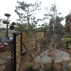 茶室/露地/アプローチ 茶室へのアプローチを兼ねた庭です。