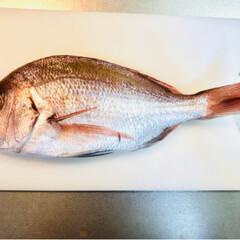 ハマチの竜田揚げ/鯛の塩焼き/めでたいね 旦那さんがこの前釣りに行き たーくさん釣…