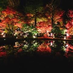 鏡紅葉/紅葉/秋