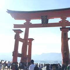 厳島神社/キッズファッション/LEE/NIKE/絶景/広島/... 広島といえば宮島♡ フェリーに乗って厳島…
