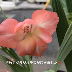 夏の花/植物 今迄、「背たけが高くなるから」と言って避…