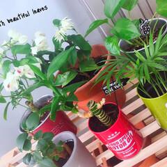 観葉植物/ベランダガーデニング/ベランダ/ガーデニング初心者/ガーデニング/グリーン/... 天気良くて観葉植物たちも出して葉水やりま…
