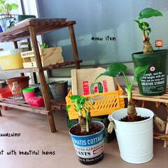 ガーデニング初心者/ガーデン雑貨/ベランダガーデン/多肉植物/観葉植物/グリーン/... ベランダ一部♥︎