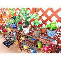 賃貸マンション/観葉植物/ガーデン雑貨/ベランダガーデン/グリーンのある暮らし/DIY/...