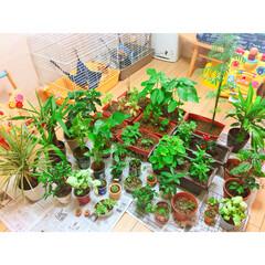 観葉植物のある暮らし/グリーンのある暮らし/ガーデニング雑貨/ベランダ菜園/ベランダガーデン/台風対策/... 台風全然大丈夫なんちゃんー?思ってたけど…