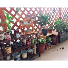 りんご箱/男前インテリア/ベランダ菜園/ベランダガーデニング/ドライフラワーのある暮らし/観葉植物のある暮らし/... リビングに置いてたりんご箱を ベランダガ…