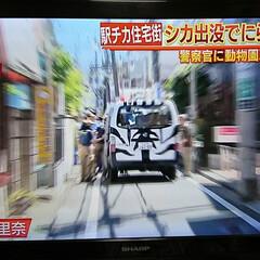 鹿/ヘリコプター/ニュース 午前中、ヘリコプターがバタバタ🏠の上を旋…(2枚目)