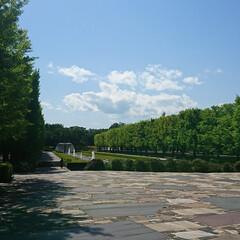満開/ネモフィラ/GW/ハル/いつもの公園/おでかけ/... 我が家のGW終わりました ご近所のお出か…(9枚目)