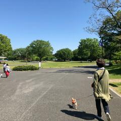 満開/ネモフィラ/GW/ハル/いつもの公園/おでかけ/... 我が家のGW終わりました ご近所のお出か…(7枚目)