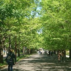 満開/ネモフィラ/GW/ハル/いつもの公園/おでかけ/... 我が家のGW終わりました ご近所のお出か…(8枚目)