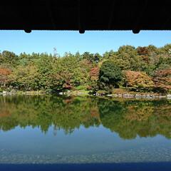 水面に映る紅葉/紅葉/日本庭園/池/公園/秋/... 今日のお出かけ公園、続きの日本庭園です🤗…